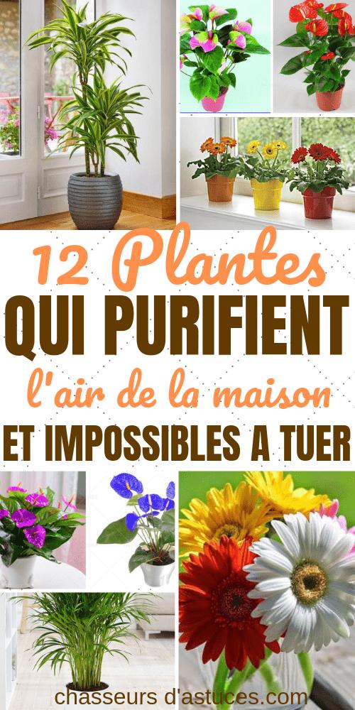12 Plantes D Interieur Difficiles A Tuer Pour Purifier L Air De Votre Maison