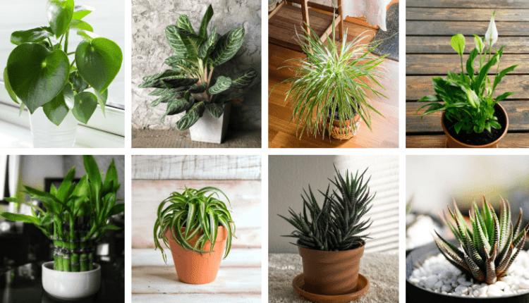 20 plantes parfaites pour salle de bain qui poussent avec ...