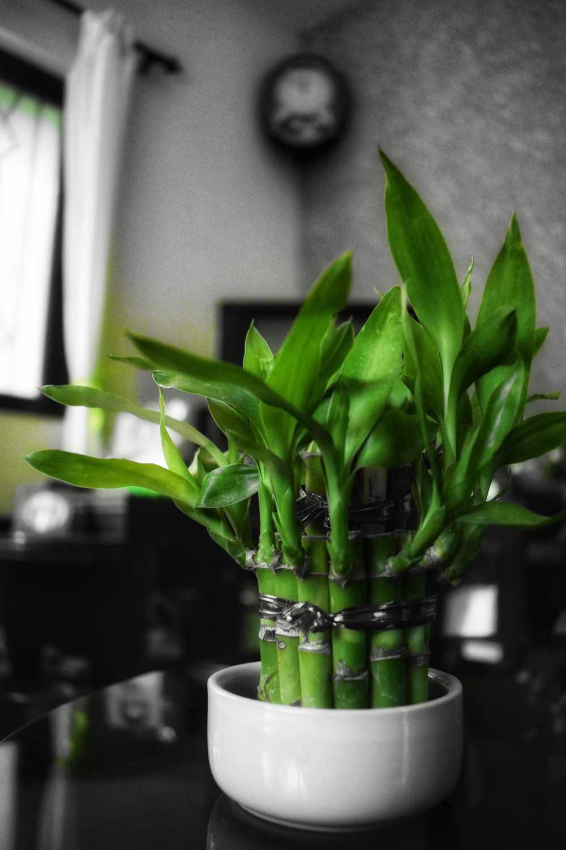 Plante Pour Salle De Bain Sombre 20 plantes parfaites pour salle de bain qui poussent avec